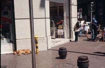 Für mich als Kynologe war interessant, wie sich die streunenden Hunde in Santiago überhaupt nicht durch den Betrieb stören liessen. Dieser Hund macht seinen Mittagsschlaf an einer belebten Kreuzung und...