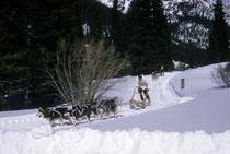 """Als ich diese """"exotische"""" Sportart auch in anderen Skidestinationen Colorados sah, wurde ich vom """"Schlittenhundesportvirus"""" befallen. So etwas wollte ich auch machen. Tatsächlich konnte ich diesen Traum später verwirklichen (s. mehr unter """"Kynologie"""")."""