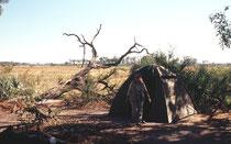 Dies war das Zuhause bei unserem dreitägigen Aufenthalte im Okavangodelta. Ohne Zaun (wie in Südafrika) mitten im Busch. Effektiv haben in der zweiten Nacht zwei Elefanten etwa 3m neben unserem Zelt gegrast, bis sie unser Guide zum Weitergehen veranlasste