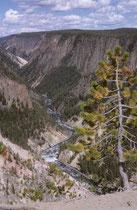 Der ca. 32 km lange Grand Canyon of the Yellowstone ist zwischen 250 und 400m tief und zwischen 500m und 1300m breit. Manchmal ist das Gestein auch grau, orange, rosa oder rot Die Farben rühren von geothermisch verfärbten Eisenvorkommen im Gestein.