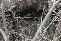 Am Nachmittag des 7. April 2017 entdeckten wir am Gegenhang eines schmalen Flusslaufes in einer Höhle eine Tigermutter mit zwei, etwa 4 Monate alten Jungtieren. Durch die Feldstecher sah man sie saugen und miteinander spielen (Fotos waren schwierig).