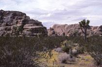 """Der Joshua-Tree-Nationalpark ist eine Wüstenlandschaft im SO Kaliforniens, die den Übergang zwischen der Mojave-Wüste und der Colorado-Wüste bildet. 1936 (und auch noch 1982) war das Gebiet ein """"National Monument"""" und wurde erst 1994 zum Nationalpark."""