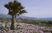 Aus dem Winter der Berge Kaliforniens und Nevadas ging es nach Los Angeles, wo die Landschaft zur gleichen Jahreszeit (Januar 1964) doch um einiges lieblicher und mediterraner anmutet.
