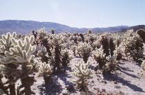 Nach unserem Abstecher nach Sudkalifornien durchfuhren wir – einmal mehr –den  2371km2  grossen Anza-Borrego Desert State Park im Osten des San Diego County, in der Colorado Desert, den grössten State Park in Kalifornien.
