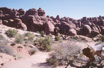 Eine weitere wilde Felslandschaft im Arches Nationalpark. Fast die Hälfte des Parks ist weitestgehend unbewachsen (mehrheitlich nackter Fels als auch offener Sand)