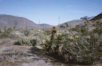 Nordwestlich von San Diego liegt der Anza-Borrego Desert State Park. Auf 2428 km2 bewahrt er ein grossflächiges Wüste-Ökosystem, das von menschlichen Eingriffen nahezu unbeeinflusst ist und ermöglicht, die Wunder der Colorado Desert kennenzulernen.