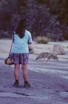 Auf dem Parkplatz des Campgrounds im Joshua Tree NP tauchte plötzlich ein Kojote in unserer Nähe auf. Er hinkte etwas und man hatte den Eindruck eines seiner Hinterbeine sei verletzt. Vermutlich suchte er nach etwas Essbarem in der Nähe von Menschen.