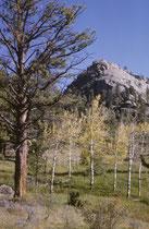 Im Rahmen unseres Ökologie-Kurses machten wir eine zweitätige Exkursion in den 1078 km2 grossen Rocky Mountain NP, nordwestlich von Boulder (Colorado), um uns mit der alpinen Fauna und Flora (der Rocky Mountains) zu beschäftigen.