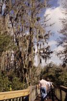…zu den mit Bartalgen behangenen Bäumen im tropischen Marschland des Everglades National Parks. Da  Umweltverschmutzung und Eingriffe in den Wasserhaushalt den Park bedrohen, steht er seit 2010 auf der roten Liste des gefährdeten Welterbes.