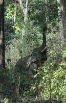 Da der Corbett Nationalpark nicht eingezäunt ist (wie manche Nationalparks in Afrika), können wilde Elefanten in das umliegende Gebiet hinaus wandern und dort nach Nahrung suchen oder – je nach Perspektive – auch Schaden anrichten.