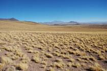 Landschaft im Altiplano auf der Rückfahrt von den beiden Seen Laguna Miscanti und Laguna Miniques nach San Pedro de Atacama