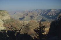 Die ebenfalls zur Pueblo-Kultur gehörenden Hopi sind ihre Nachfahren und lebten wie andere Indianerstämme in jüngerer Vergangenheit in der Gegend. Noch heute wohnen einige Havasupai-Indianer im Canyon, der alljährlich von rund 5 Mio Menschen besucht wird.