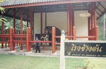 Im Elephant Conservation Center in Chiang Mai leben heute die sogenannten weissen Elefanten des Königs. Anstatt stets in einem Tempel angebunden zu sein, befinden sie sich nun in frischer Luft und werden auch ausgeführt.