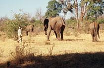 Nach der etwa 3-stündigen Safari wurden die Elefanten zur Nahrungsaufnahme und zur Erholung wieder in das Reservat geschickt. Angelockt wurden sie bei Bedarf mit Leckerbissen. Ob der Betrieb noch existiert wissen wir nicht (Touristenschwund…).