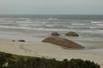 Hier sind wir an der Meeresküste auf der grossen Sanddüne im Coroong NP. Die Felsen im Sandstrand sehen aus wie gestrandete Wale.