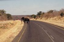 Man muss also beim Fahren (wie grundsätzlich in Afrika) auf allerhand gefasst sein. So können plötzlich auch Elefanten vor einem die Strasse überqueren...