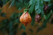 Diese wundersame Blüte haben wir in Tilba Tilba gesehen und hatten (und haben immer noch) keine Ahnung, um welche Pflanze es sich handeln könnte.