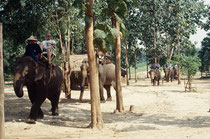 Ausflug mit Asiatischen Elefanten in den Dschungel im Elephant Conservation Center Chiang Mai.