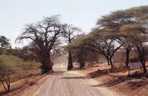 Von Savuti fuhren wir gegen Norden an den Chobe Fluss. Hier die Einfahrt nach Kachekabwe, einer kleinen Ortschaft am Chobe. 82 km des Uferstreifens mit der Strasse und ein paar weitere kleine Ortschaften sind nicht Teil des Nationalparks (problematisch!).