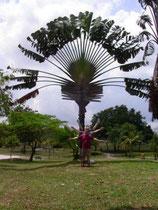 Lustige Palme oder ?