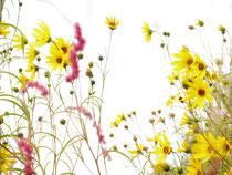 Blüten im Sommerwind