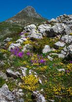 Gran Sasso, Monte Bolza fioritura