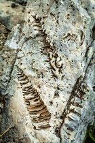 Majella, fossili