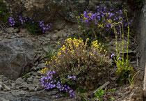 Lago di Campotosto, fioriture