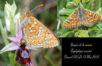 Damier de la succise-Euphydryas aurinia-Crussol (07) 13/05/2010