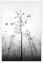 © Mora Tiziano