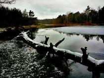 Schavener Heide