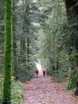Cote à cote dans le bois de Penclen