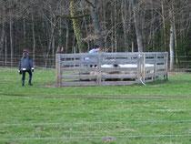 Geschafft - alle Schafe im Pferch - mit Hund geht es doch einfacher