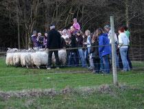 Ganz nah bei den Schafen - jüngste Zuschauerin ist 3 Monate alt