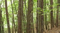 Ehemalige Pechbäume