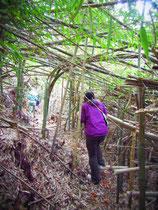 竹のトンネル♪  昨年?おと年??あの豪雪でこうなったんでしょうか・・・