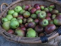 Manzanas en un paxo