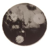 Fleurs artificielles. Tirage positif sur miroir. 20 cm de diamètre.