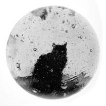 Le Chat. Tirage positif sur hémisphère de verre soufflé artisanal. env. 4,5 cm de diamètre.