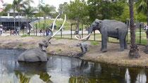 Dans ce parc préhistorique, le pétrole remonte à la surface de l'eau