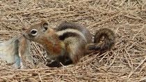 De petits écureuils nous tiennent compagnie