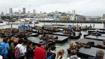 Fishermans Wharf et ses lions de mer se prélassant sur les pontons de bois