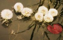copyright erdengoldKUNSTwerk; Das Sternbild des Wagens spontan entstanden aus Samenbällchen auf vom Wind bewegten Wasser