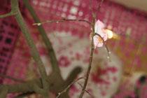 ©  Nathalie Arun Installation letzte Sakura