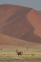 Namibie, dune du park de Naukfluft près de Sossusvlei, Big Mamma dune de 400 m de haut à gravir par la face ouest longue pente douce, ou la face nord, courte mais très pentue...