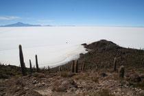 Bolivie, Uyuni, Salar, Ile Pescado