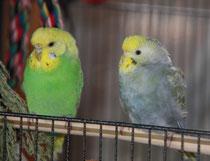 Lilo und Pearl Juli 2011