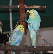 Otto und Mia im Mai 2011
