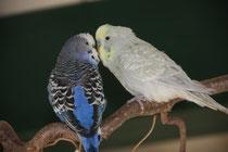 Blue und Earl beim Schmusen