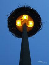 Stork Tower